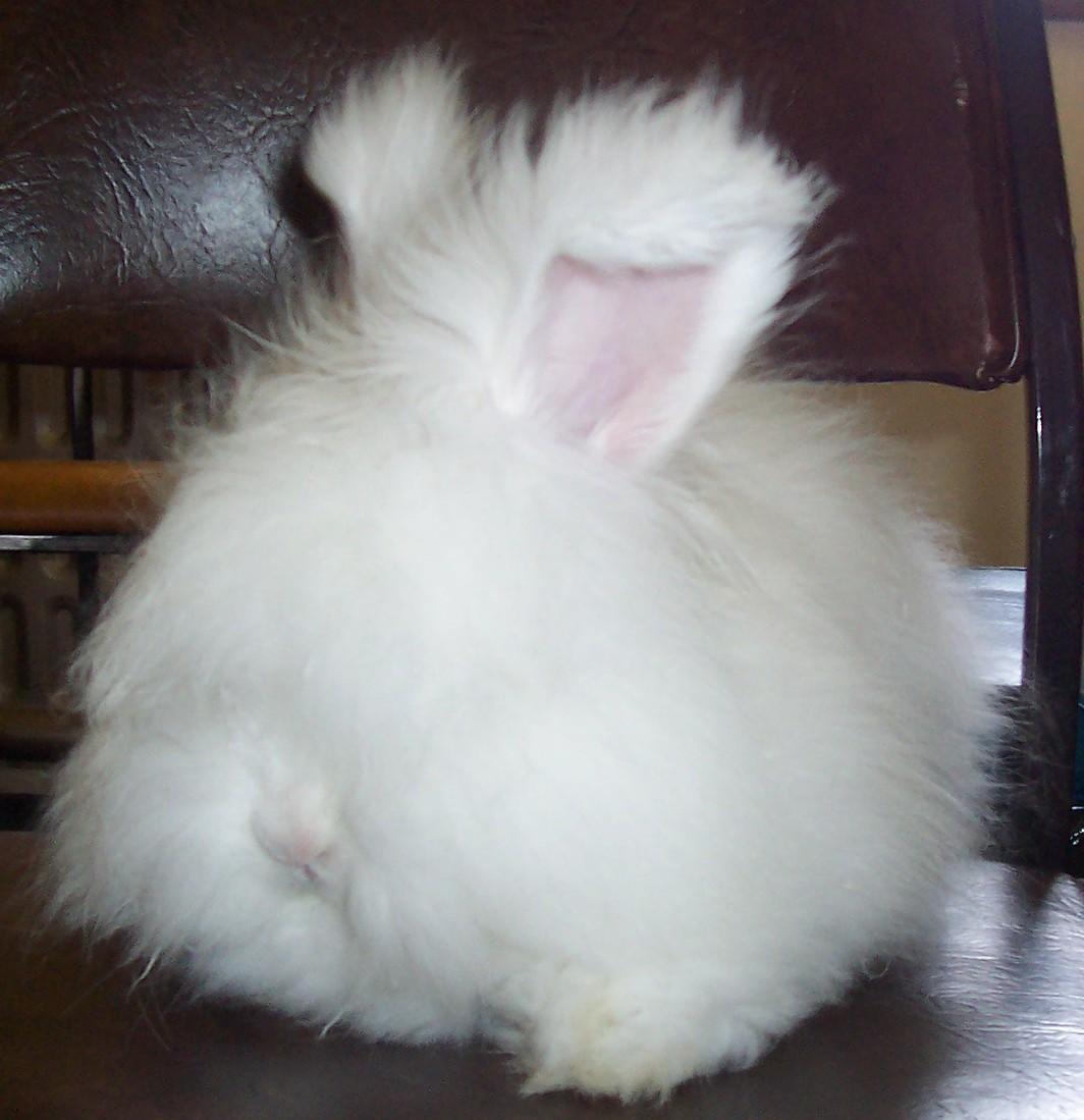 Home - Hops'N'Lops Rabbit Stud